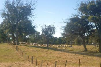 49 Coolabah Rd, Bungonia, NSW 2580