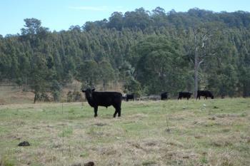 624  Tabulam Rd, Lower Bottle Creek, NSW 2469