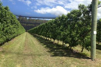 13 Pacific Hwy, Mororo, NSW 2469