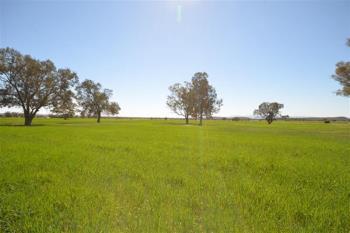 267 Curracabah Rd, Baan Baa, NSW 2390
