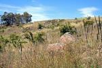 38 Hawthorn Cl, Jindabyne, NSW 2627