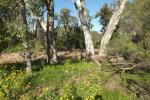 Lot 4/1557 Kaputar Rd, Narrabri, NSW 2390