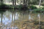 41 Peckhams Rd, Ewingar, NSW 2469
