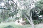 81  Wilburtree St, Tamworth, NSW 2340