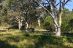 Lot 2 Forster Dr, Bawley Point, NSW 2539