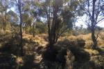 109 Briar Lane, Mount Rankin, NSW 2795