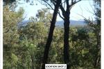 Lot106&107 Wollombi Rd, Paynes Crossing, NSW 2325