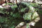 Lot 46/47 Cedar Hills Rd, Little Forest, NSW 2538