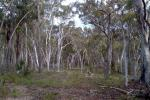 126 Jerralong Rd, Windellama, NSW 2580