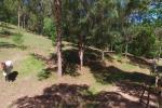 87 Gold Creek Rd, Brookfield, QLD 4069