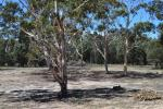 917 Sandy Point Rd, Lower Boro, NSW 2580