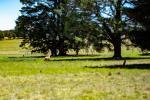 1303 Highland Way, Tallong, NSW 2579