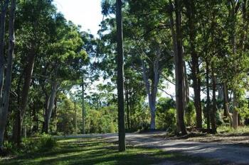 16 Parakeet St, Macleay Island, QLD 4184