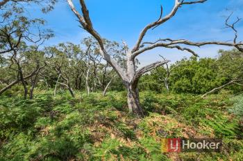 22 Currawong Gr, Cannons Creek, VIC 3977