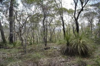 Lot 10 Muller Rd, Baffle Creek, QLD 4674