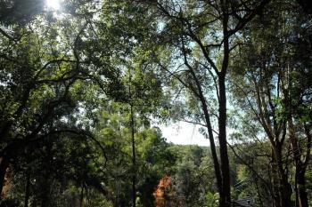 11 Rothwell Rd, Turramurra, NSW 2074