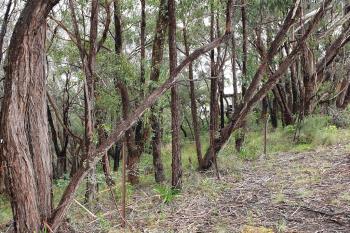49 Boronia Rd, Bullaburra, NSW 2784