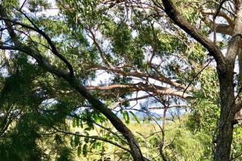 126-128 Treasure Island Ave, Karragarra Island, QLD 4184