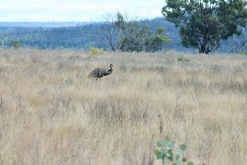 12704 Golden Hwy, Uarbry, NSW 2329