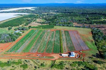 45 Plantation Rd, South Isis, QLD 4660
