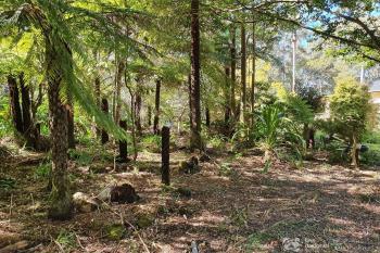 24 Canyon Pde, Springbrook, QLD 4213