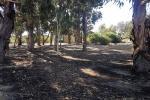 Lot 34 Wandoo Rise, Gabbadah, WA 6041