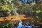 276 Brush Creek Rd, Cedar Brush Creek, NSW 2259