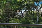 9/78 Parkyn Pde, Mooloolaba, QLD 4557